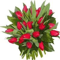 Букет из 25 красных тюльпанов