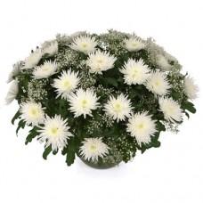 Корзина из 35 белых хризантем