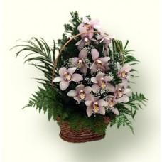 Корзина из Орхидей c зеленью