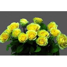 "Букет из 15 желтых роз ""Элиос"""